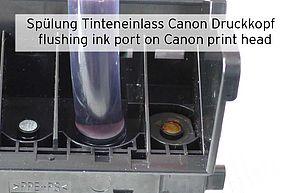 Pulizia dei fori di ingresso dell'inchiostro della testina di stampa Canon